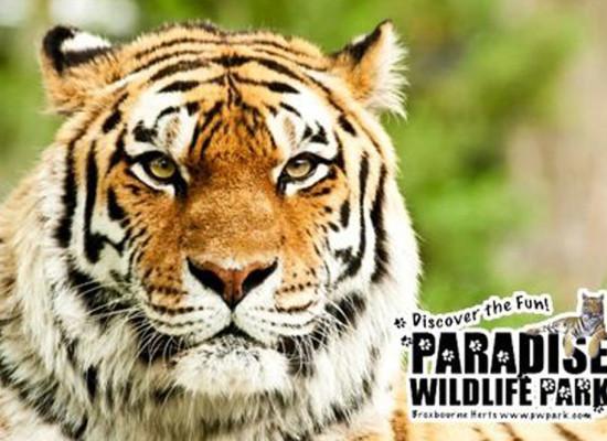 Paradise Wildlife Park – Nursery