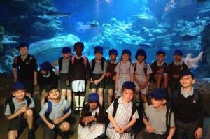 news_london_aquarium_3