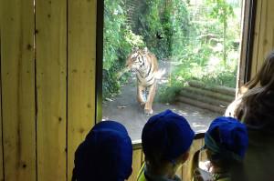 news_paradise_wildlife_park_3